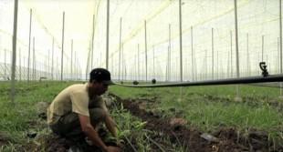 Eléphant Vert investit 65 millions d'euros au Maroc