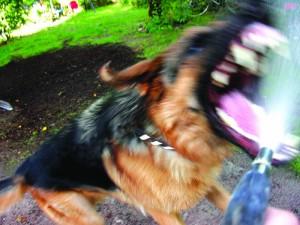 DOSS - Dangers des chiens