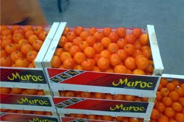 agrume maroc