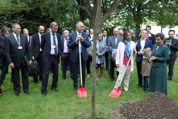 Plantation d'un arbre en commémoration de la signature de l'Accord de Parisde la signature de l'Accord de Paris