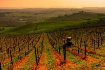 Agriculture bio Italie