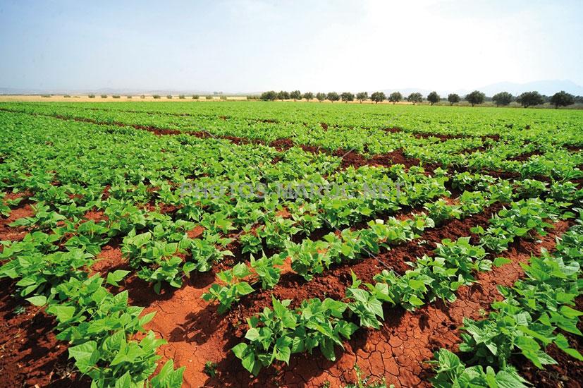 Campagne agricole : les dernières pluies bénéfiques