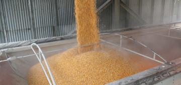 Deerfield revendique une grande capacité de stockage de graines.