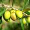 Ce fonds spécialisé dans le secteur agroalimentaire vient d'acquérir dans la région de Meknès quelques 600 hectares.